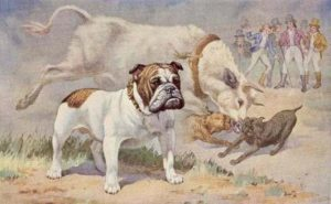 Bulldog Inglese: le origini